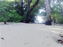 First National Resort Site Vanuatu