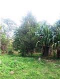 First National Farm Vanuatu