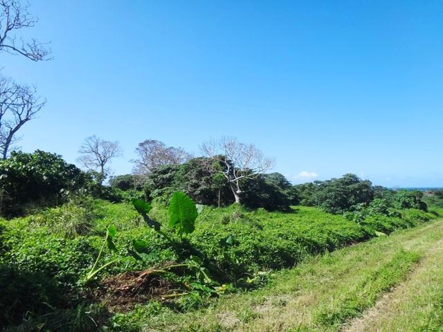 Teouma Hillside Vanuatu