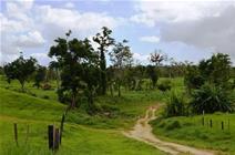 Farming land with options (1362) Port Vila - Vanuatu