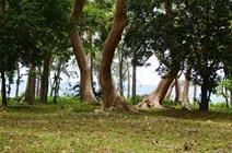 Flametree Pangona Lot #10, (#1406) Port Vila Vanuatu